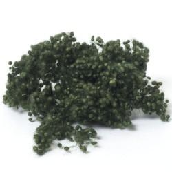 Dark Green Wool Nepps