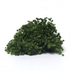 Medium Green Wool Nepps
